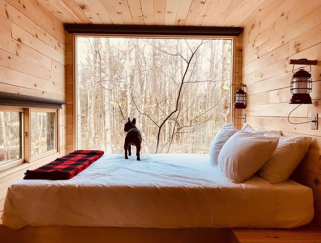 tiny houses and dogs of instagram