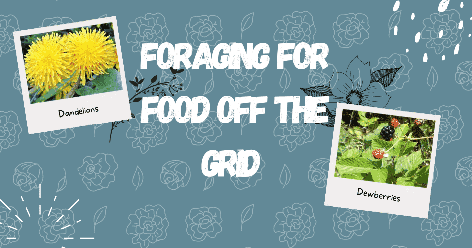 Foraging for Food Off the Grid